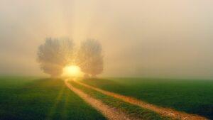 hope, nature, away